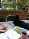 Zeus the Cat in the Flat, Writing Weekend